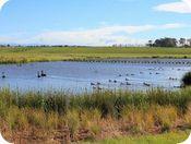 Lincoln Wetland Photo