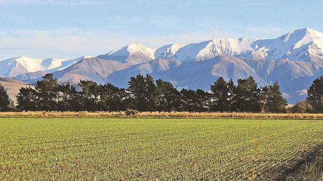 A green farm paddock of newly sprouting plants in front of a range of snowy mountains