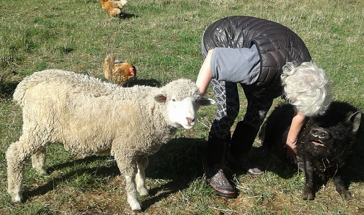 Grey haired woman in gumboots and a black gilet bent over scratching a pigs belly and a stroking a sheep
