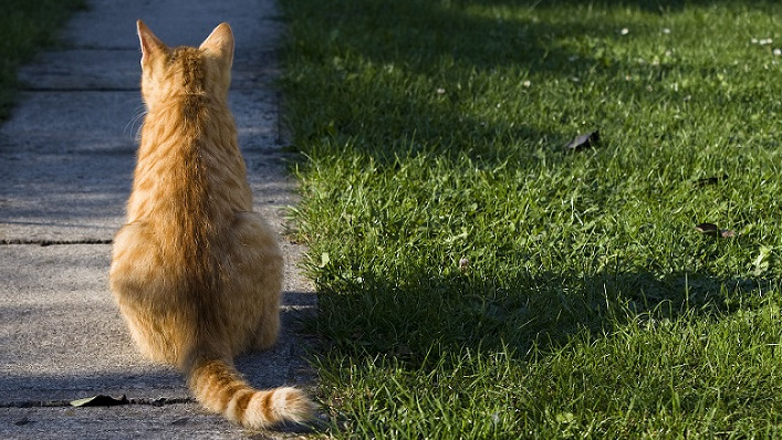 A ginger coloured cat sits with its back turned on a pavement next to a strip of grass
