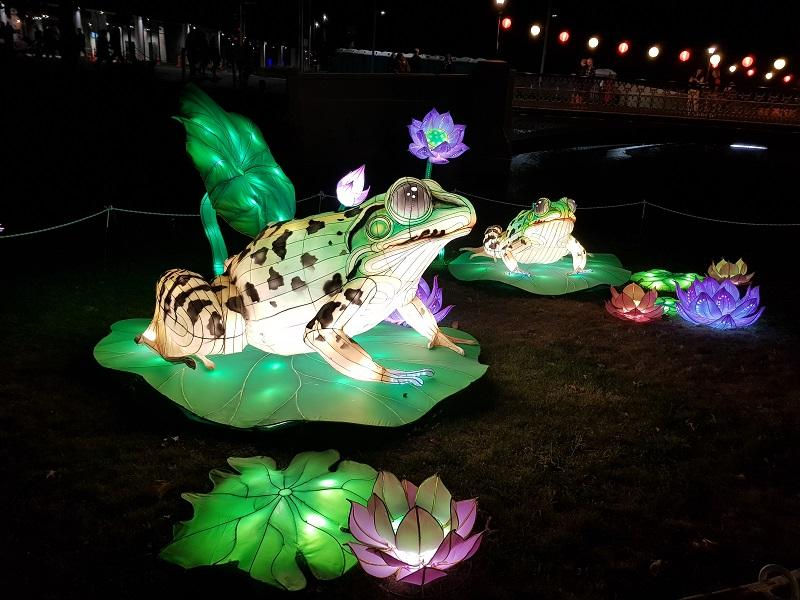 Two lanterns in the shape of frogs sitting on lily pads float on a pond at night alongside lit up flower lanterns