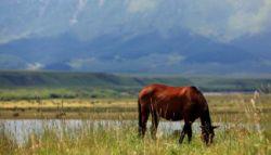 shandan-horse