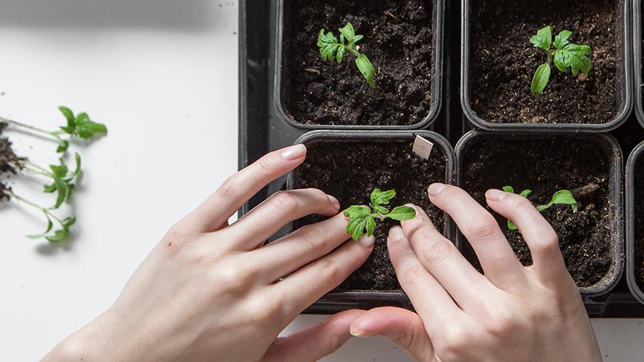 Seedling Swap