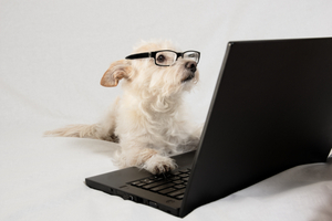 Dog looks like he's using a laptop