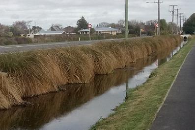 A drain alongside a road in Leeston