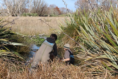 Surveying for Canterbury mudfish